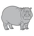 Hippo or hippopotamus
