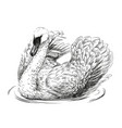swan is swimming vector image vector image