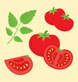 cartoon flat style tomatoes vector image