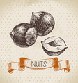 Hand drawn sketch nut vintage background vector image vector image