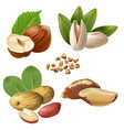 set icons of nuts vector image vector image