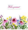 watercolor seamless border field and wild herbs vector image