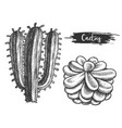 cactus plant with flower sketch cacti blossom vector image vector image