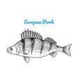 river and lake fish european sea creatures vector image vector image