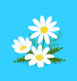 cartoon camomile on a blue background vector image