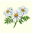 daisy hand drawn painted vector image