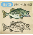 hand drawn largemouth bass or gamefish vector image vector image