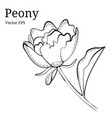 isolated peony flower design in vector image vector image