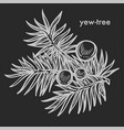 yew tree branch with seed cones and needle leaves vector image vector image
