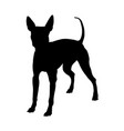 american hairless terrier silhouette vector image vector image