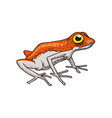 cute orange frog tropical amphibian wild animal vector image vector image