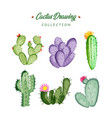 hand drawn cactus collection vector image vector image