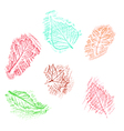 Pencil drawing of leaves vector image vector image