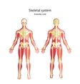 Anatomy guide of human skeleton Anatomy didactic vector image vector image