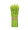 bunch asparagus vegetable