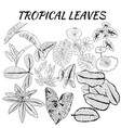 collection of tropical leaves in sketch style vector image