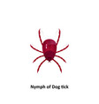 dog tick on a white background vector image vector image