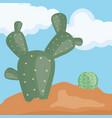 exotic cactus plants in desert vector image