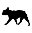 french bulldog silhouette vector image vector image