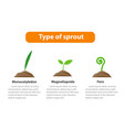 type of sprout plant infographic vector image