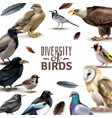birds diversity frame composition vector image vector image