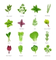 Herbs Icons Set vector image
