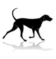 hunting dog walking silhouette vector image vector image