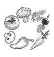 vegetables sketch engraving vector image vector image