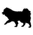 volpino italiano silhouette vector image vector image
