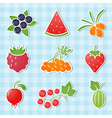 berry icons vector image