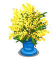bouquet of yellow mimosa in blue vase vector image vector image
