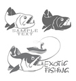 exotic fish vector image vector image