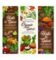organic herbs and natural farm spices seasonings vector image vector image