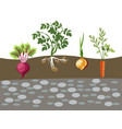 planted vegetables set cartoon vector image vector image