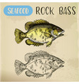 rock bass or goggle-eye perch sketch vector image vector image