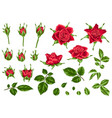 set of decorative red roses vector image