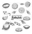 black and white set of hand drawn tropical citrus vector image