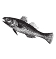 Black Goby vintage engraving vector image vector image