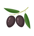 colorful black olives with green leaves vector image vector image