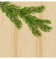 Green spruce branches on the background nature of vector image