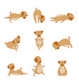 cartoon dog in yoga pose set- cute animal vector image vector image