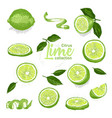 color set of hand drawn tropical citrus fruit vector image vector image