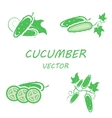 flat cucumber icons set vector image