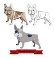 french bulldog dog isolated on white background vector image