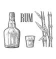 glass and bottle rum with sugar cane vector image vector image