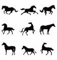collection black horses silhouettes isolated on vector image