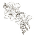 Hand Drawn Hibiscus Flower Sketch vector image vector image