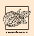 hand drawn raspberry vector image vector image