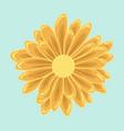 isolated orange flower single daisy flower vector image