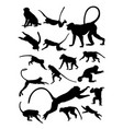 monkey silhouette vector image